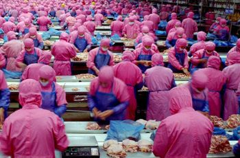 china chicken processing