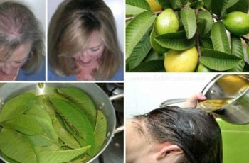 guava leaf health benefits