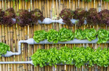 vertical-garden-fence