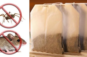 mice and spider tea bag