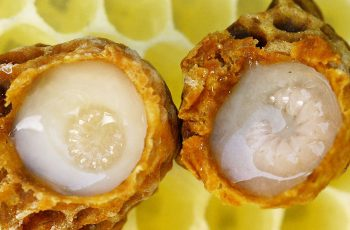 bees royal jelly healing