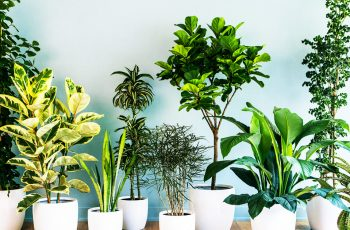 household plant benefits