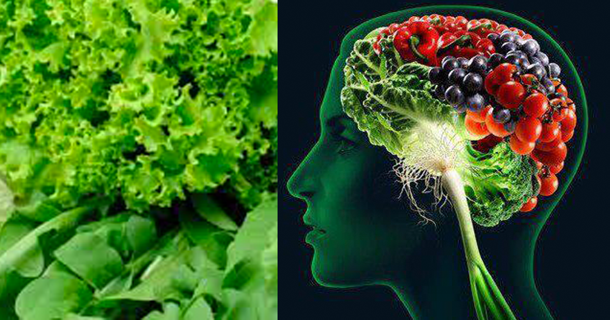 leafy-green-diet-memory