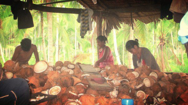 coconut waste wood alternative
